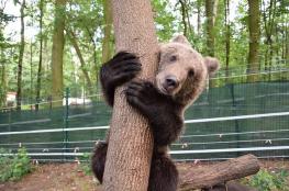 Poznań Atrakcja Zoo Ogród Zoologiczny Poznań
